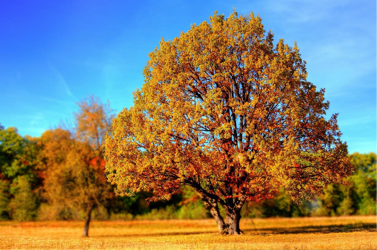季節の変わり目には体調が崩れやすい 頭痛、自律神経症状にご注意を